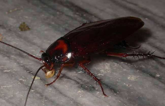 """哈尔滨女子一觉醒来竟然发现耳朵里""""淹死""""了一只蟑螂"""