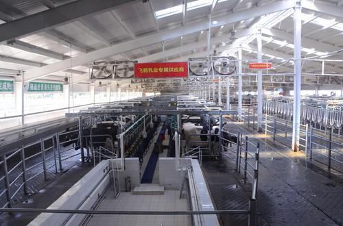 飞鹤乳业生产车间。方圆摄