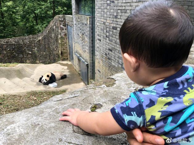 张歆艺儿子看大熊猫