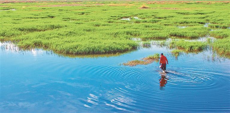 安达红旗泡湿地夏景。 本报资料片