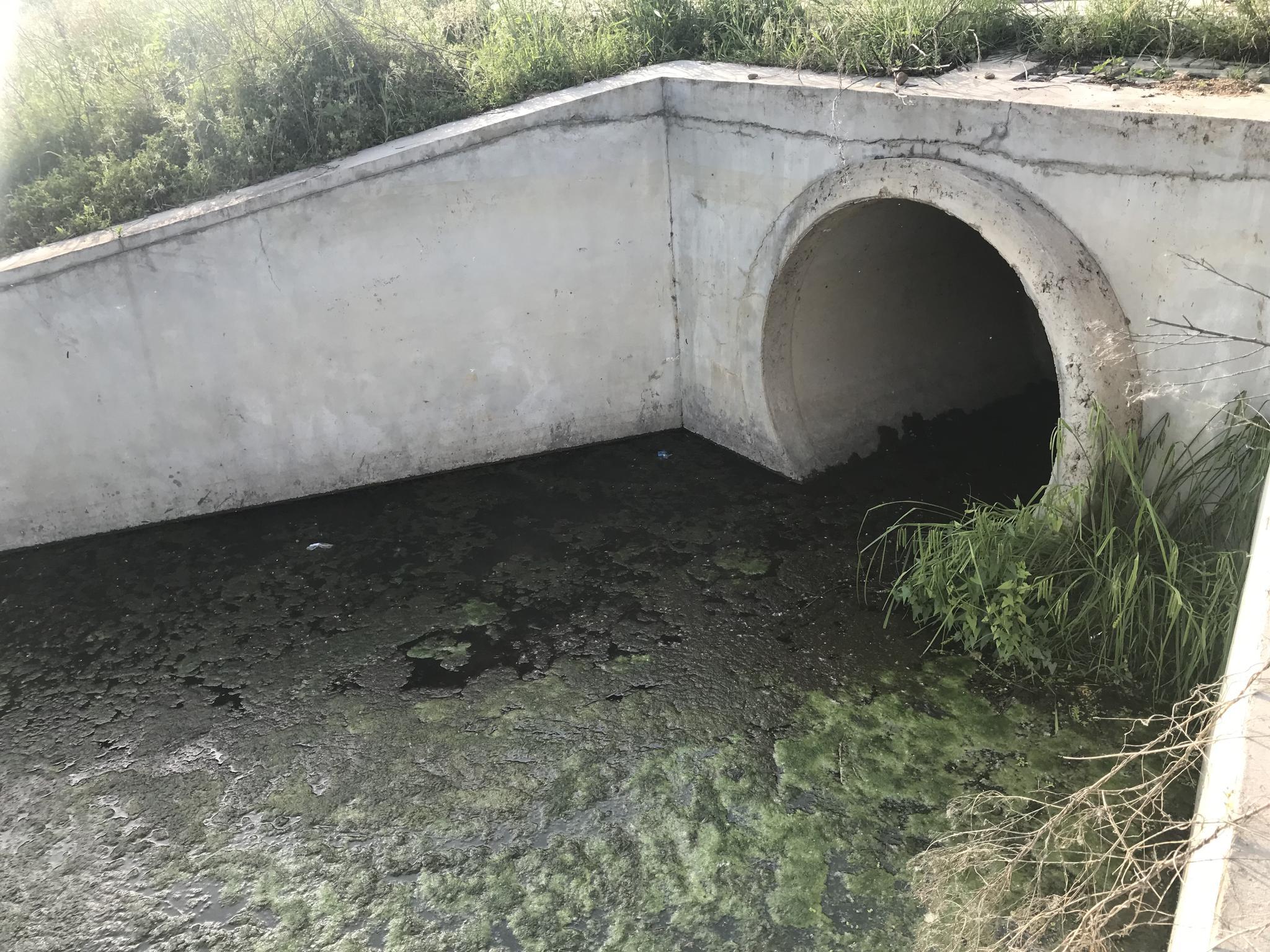位于随州欢乐世界府河对岸的一处生活污水直排管道,生活污水在这里未经处理就直接流入府河。陈耳生 摄