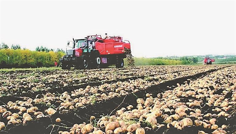 马铃薯种植基地。本报资料片