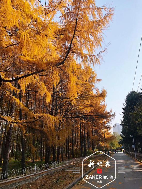26日黑龙江省森林植物园闭园 预计明年4月末开放
