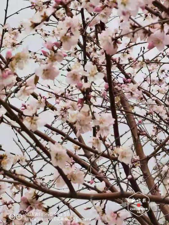 人間四月(yue)天 冰城春花盛(sheng)開的好時節來(lai)了…