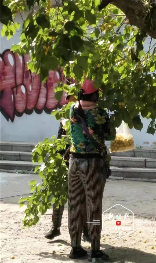 """"""" 我还看到过有人爬树去够果子。"""" 一位市民说他曾试图劝阻,但根本阻止不了。"""