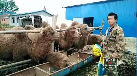 """农家院里养骆驼 新农人要建""""乡村动物园"""""""