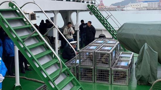 斑海豹放归活动现场。新京报记者 李阳 摄