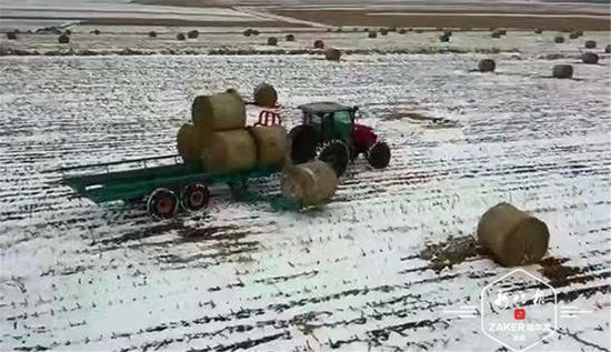 黑龙江省农业农村厅召开当前农业农村重点工作视频会议
