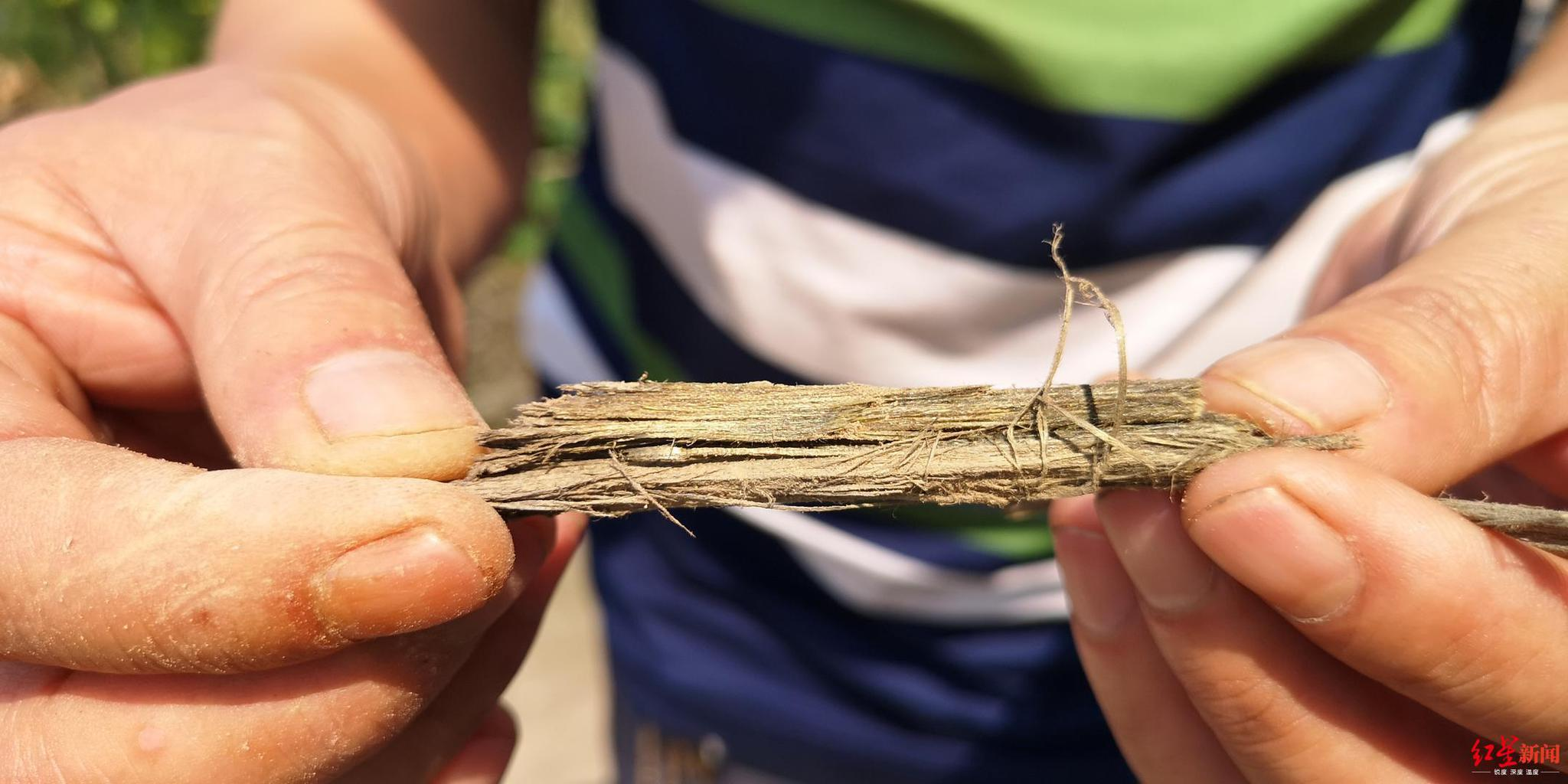 挖出的乌木其木屑带香味