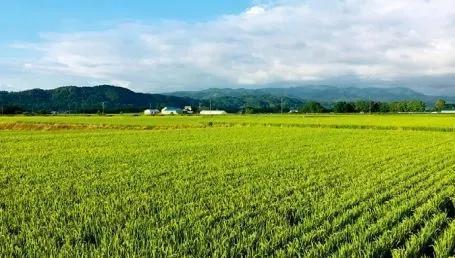 【娓娓稻来】亚洲水稻概况——越南