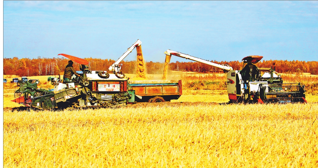 垦区建设农场2.68万亩水稻种植区