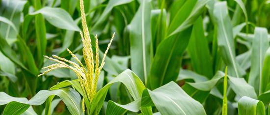 黑龙江全省绿色、有机食品认证面积预计将达到8500万亩