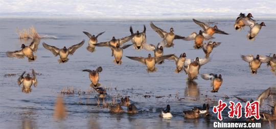 保护区内成群的候鸟 吕忠信 摄