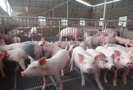前4月黑龙江省生猪存栏1275万头 恢复至2017年同期九成以上