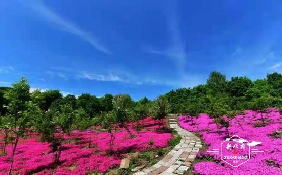 """小(xiao)花圃帶火旅(lv)游大產(chan)業 五常農民(min)建(jian)""""百花園""""等你"""