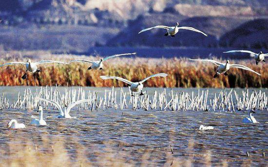 即日起哈尔滨市开展冬季保护野生动物资源专项行动