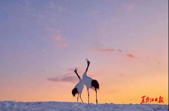 雪地观鹤。