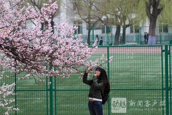 黑龙江晨报记者 张澍摄