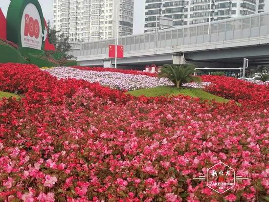 60余种花争奇斗艳 哈市百余个彩化节点扮靓冰城迎国庆