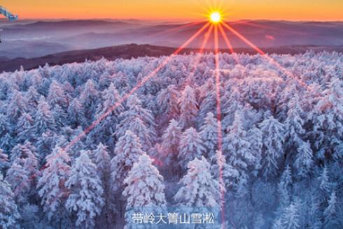 """""""五湖四海·游龙江""""伊春冬季特色旅游线路"""