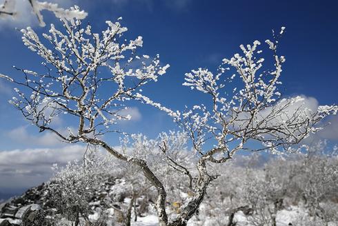凤凰山雾凇、雪淞景观齐现 如临仙境