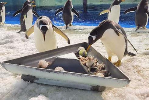 哈尔滨极地馆南北极动物过端午