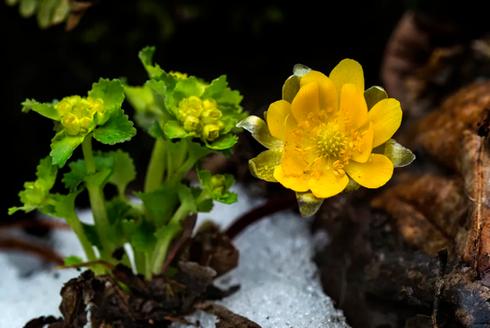 在百花盛开之前送你一朵小花花
