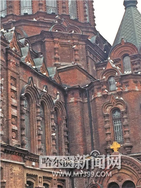 广场鸽落在建筑物上,不敢到地面吃食。