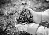 习总书记关心黑龙江煤炭产业发展