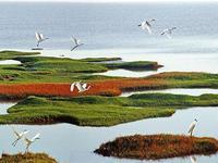 习近平叮嘱黑龙江要保护好湿地
