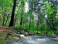 习近平:生态就是资源,生态就是生产力