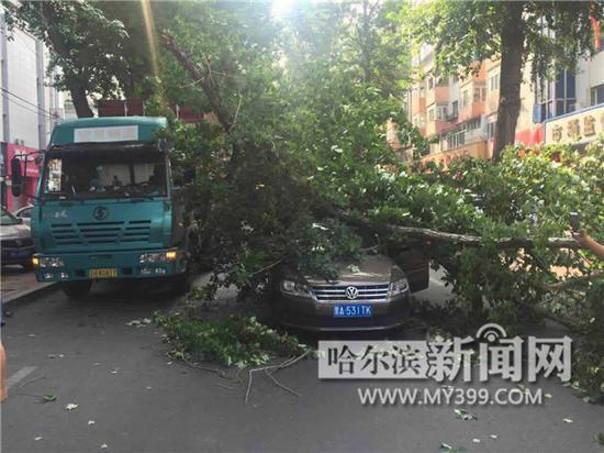断树砸中过路车。