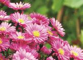 冰城街头花卉即将斗艳 17种外来花卉迎大考