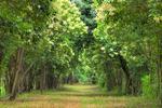 大庆市春季造林工作已全面启动 已完成5000亩