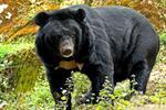 哪有熊出没?黑龙江省将与俄方联手监测