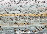 黑龙江农垦宝泉岭管局迎来近年最大候鸟迁徙群