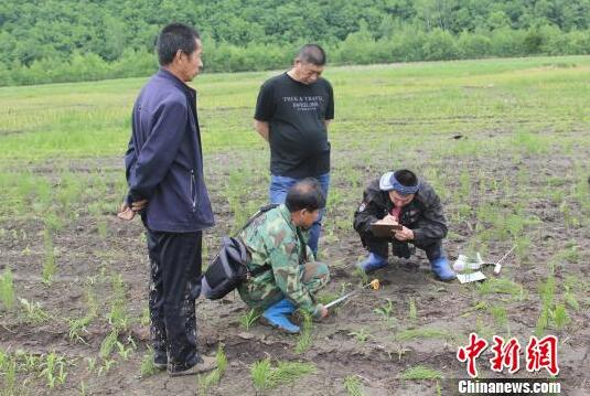 科研人员在现场对足迹、步距、掌垫测量辨认 孙继旭 摄