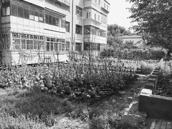 """绿地变成私家""""菜园子"""""""