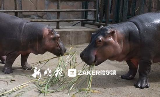 青仔(左)和嘟嘟(右)共进午餐