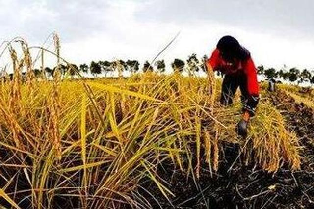 阿城区被定为全国农村集体产权制度改革试点单位