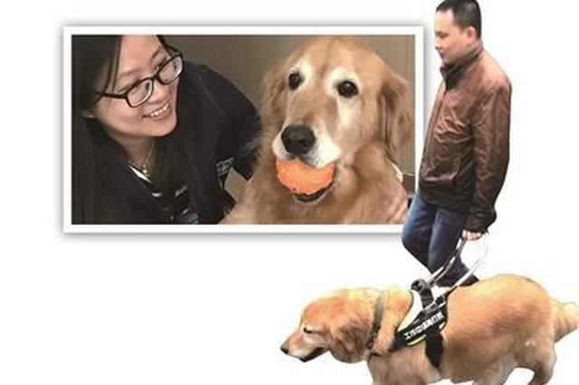 导盲犬陪主人4年没犯1次错 距主人从未超过10米