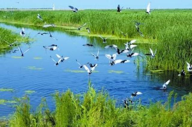 大庆市湿地保护管理办法发布 12月1日起开始实施