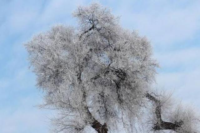 未来48小时哈尔滨降8℃以上 最低温将破零下20℃