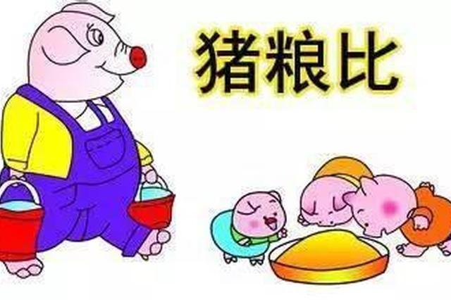 猪粮比进入黄色预警区 多点发力稳定猪肉市场