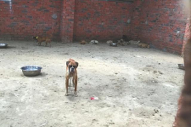 男子见狗被偷上前拦截面包车 被拖行数十米身亡