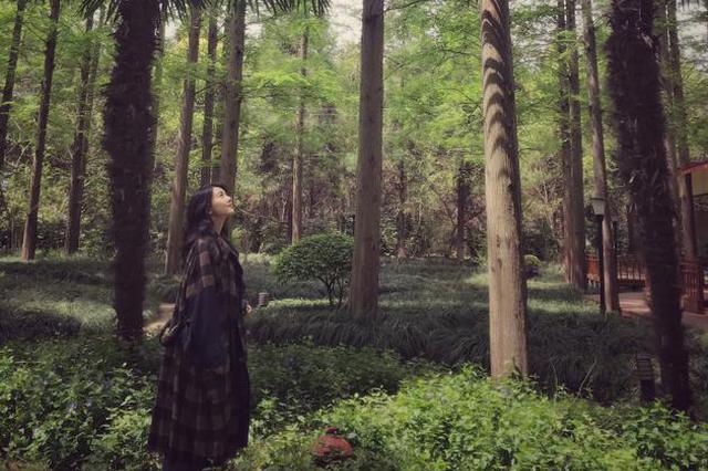 """高圆圆穿长裙晒踏青照 漫游森林上演""""绿野仙踪"""""""