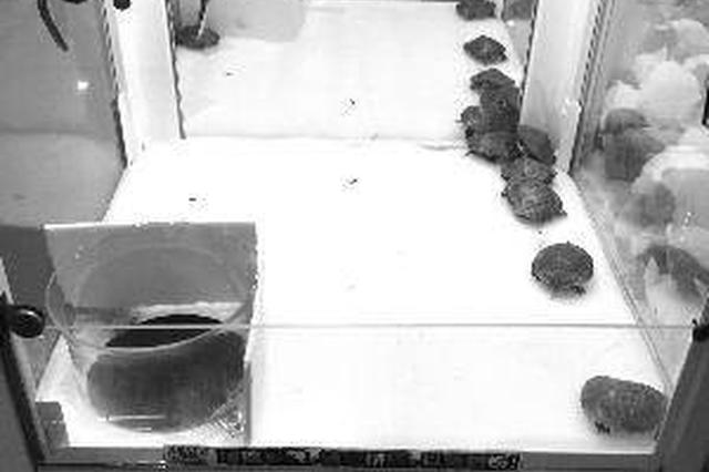 江苏一商场抓娃娃机抓活乌龟被指虐待动物(图)