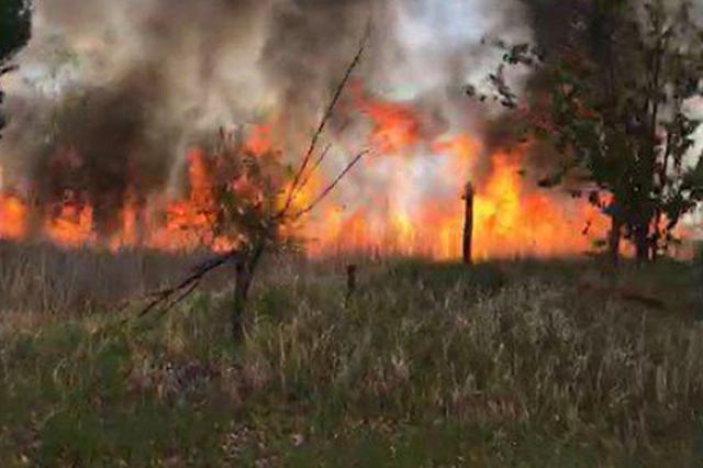 哈市狗岛数百平方米杂草小树起火 消防部门1小时扑灭