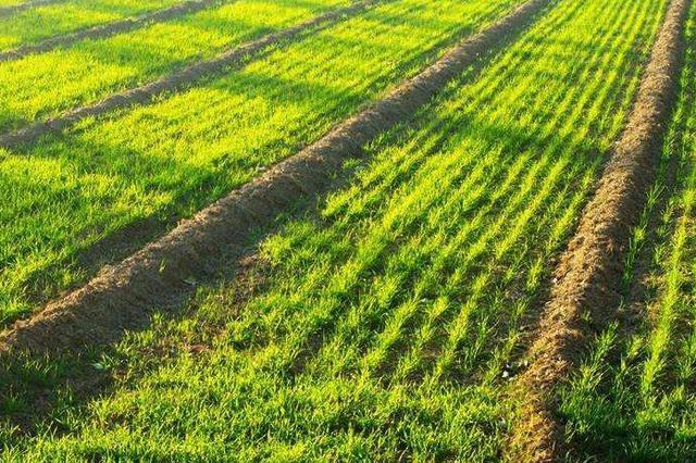 黑龙江强化措施抗旱保春播全省农作物播种已过九成