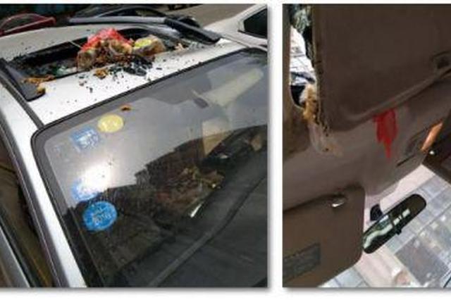 男子爱车被高空抛出垃圾砸穿车顶 车内臭气冲天